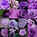 130x130 sq 1325005568305 purpleflowers98610m