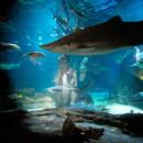 130x130_sq_1407950306708-atlantis-aquarium-wedding-photos