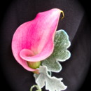 pink mini calla with dusty miller and a silver wire-wrapped stem