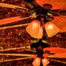 130x130_sq_1349714357703-arborlightscloseup