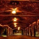 130x130_sq_1349714364303-arborlights