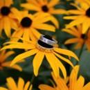 130x130 sq 1414773511229 david and don wedding0023
