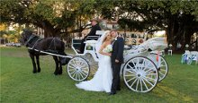 220x220 1363823896877 brigeandgroomwithhorseandcarriage