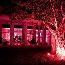 130x130_sq_1330469115105-pinklightingtree