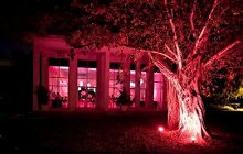 220x220_1330469115105-pinklightingtree