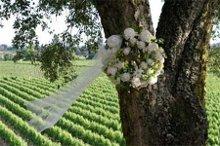 220x220 1208121931175 florali wwlogo