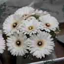 130x130_sq_1295983634394-courtyardflowers2