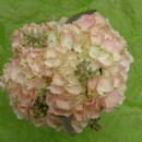 130x130 sq 1400840162959 pink hydrangea  seeded eucalyptus accents top view