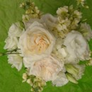130x130 sq 1400840778723 white ivory with hint of blush hydrangea garden ro