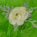 130x130 sq 1400841706827 boutonniere white ranunculus  dusty mille