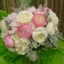 130x130 sq 1400841987214 white ivory hydrangea white  pink ranunculus  dust