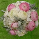 130x130 sq 1400842024577 white ivory hydrangea white  pink ranunculus  dust