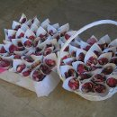 130x130 sq 1329264870847 elizabethwilmot.petals.pa240051