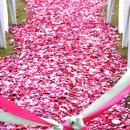 130x130 sq 1364660237012 2013.photosbymissann.petalsflyboynaturals.weddingaisleiceland.1