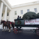 130x130 sq 1456936946980 2015 white house tree in front