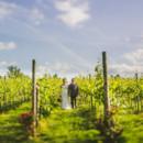 130x130 sq 1418314953202 vineyard shot
