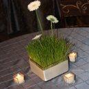 130x130 sq 1258575372398 wheatgrassdaisies
