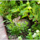 130x130 sq 1467910764806 wild bunnies hanging out at chatfield botanic gard