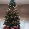 96x96 sq 1342198604602 christmastree