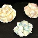 130x130 sq 1340914304571 shells3