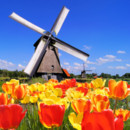 130x130 sq 1431551703615 bigstock dutch tulips and windmills 35170079