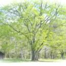 130x130 sq 1373395515091 tree
