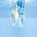 130x130_sq_1341265845257-wilmingtonncunderwaterengagementpictures11