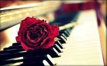 220x220 1451418220 ea331d218c8b8012 red rose piano