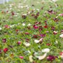130x130 sq 1384731785085 kristen flower petal