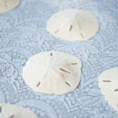 130x130 sq 1384733301418 erin tony ceremony sand dollar