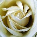 130x130 sq 1346260479892 rose