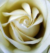 220x220 1346260479892 rose