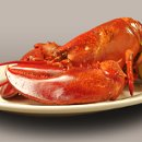 130x130_sq_1337961682689-lobstercopy