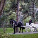 130x130 sq 1362446453653 wedding2