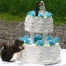 130x130 sq 1464197345213 squirrel eating wedding cake