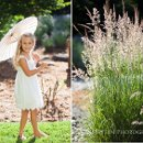 130x130 sq 1342043022786 guernevilleweddingphotography159