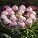 130x130_sq_1371953607715-wedding-cupcakes