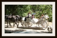 Canyon Shadow Percherons & Carriages photo