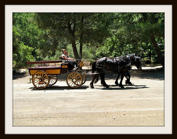 photo 2 of Canyon Shadow Percherons & Carriages