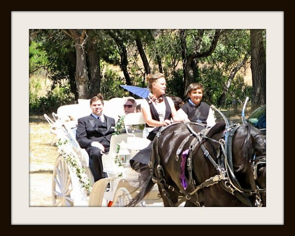 photo 4 of Canyon Shadow Percherons & Carriages