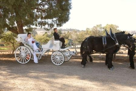 photo 5 of Canyon Shadow Percherons & Carriages