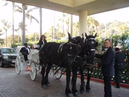 photo 6 of Canyon Shadow Percherons & Carriages
