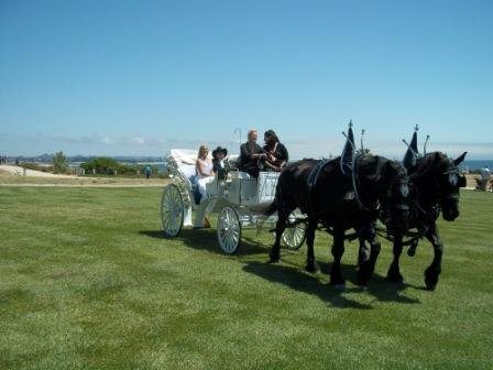photo 7 of Canyon Shadow Percherons & Carriages