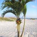 130x130 sq 1228575157034 beach 15 jpg