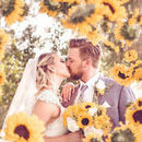 130x130 sq 1526983511 6d4c248ba0567b46 1435702755435 wedding portrait sunflowers flying bokeh jimmy b