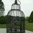 130x130_sq_1349205271053-blackbirdcage