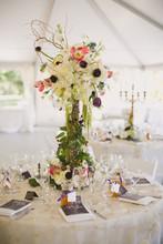 220x220 1382635174893 levine wedding 6 reception 0042