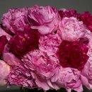 130x130 sq 1357597595746 trellisflowers3408