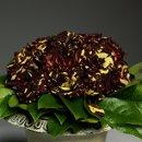130x130 sq 1357603800258 trellisflowers3434