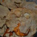 130x130 sq 1357752225720 cookies